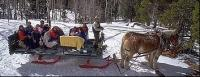 A Sleigh Ride pulled by two of our Belgian Draft Horses, wearing sleigh bells, and a hot cup of cider make a great escape!
